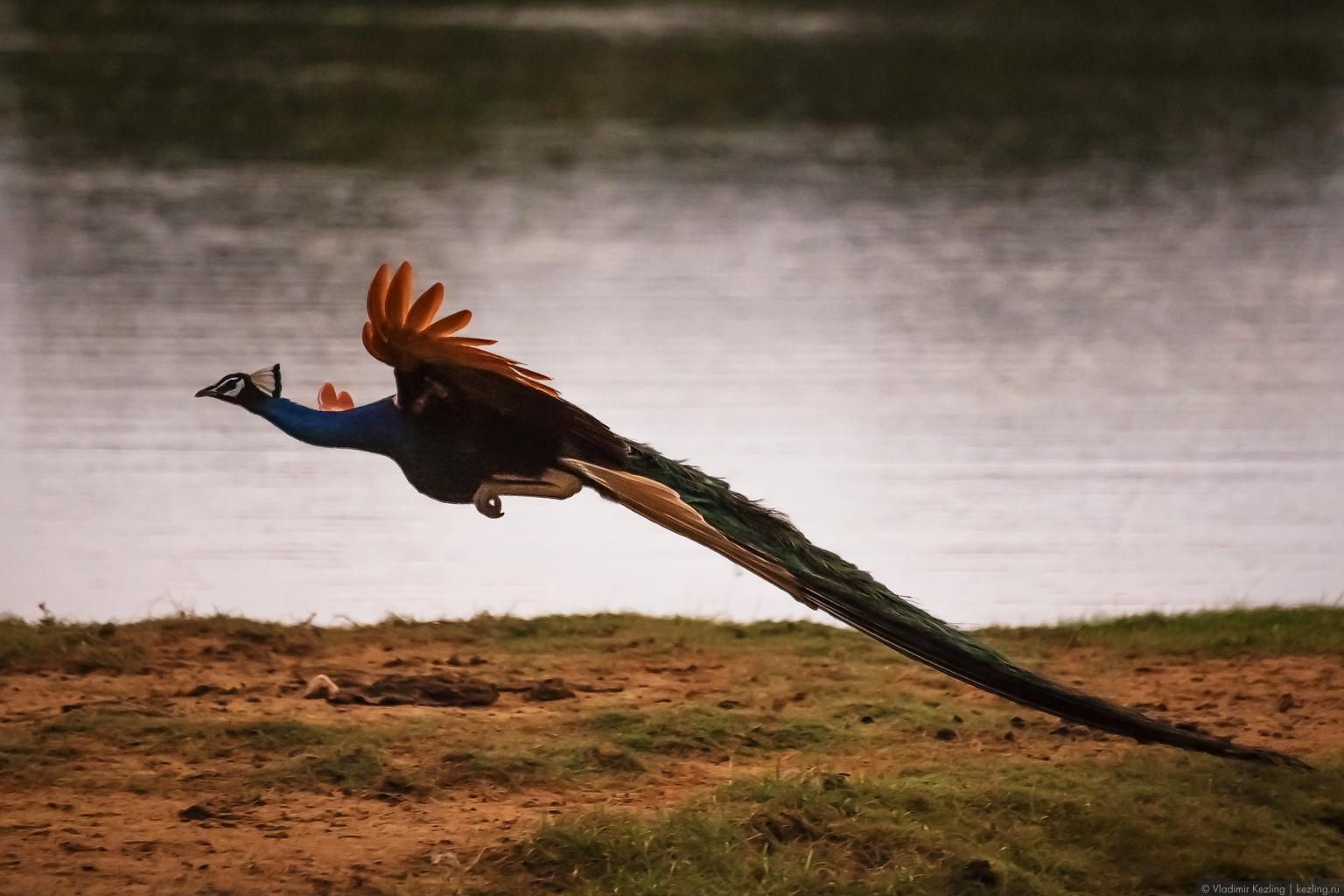 Цейлонские дневники. Национальный парк «Яла»