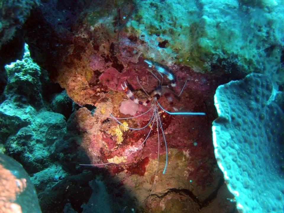 Ну насчет того что делать в  Акабе нечего Вы поторопились. Может погода была не та, а может настроение, но в Акабе обалденный дайвинг, гораздо насыщенней чем в Эйлате, не смотря на близость расстояния. Мы ныряли в апреле вода как слеза прозрачная видимость 50 метров. огромное количество осьминогов и черепах. Глаза разбегаются от количества форм и красок кораллов. Пол отпуска пролетело не заметно и так не хотелось уезжать.