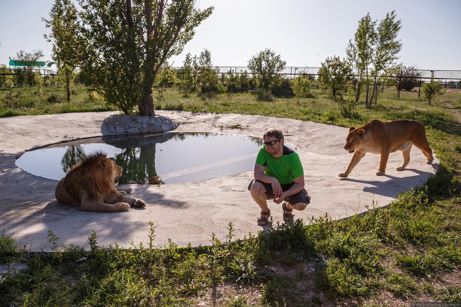 Крым переходного периода. Парк львов «Тайган» — самое захватывающее место Крыма