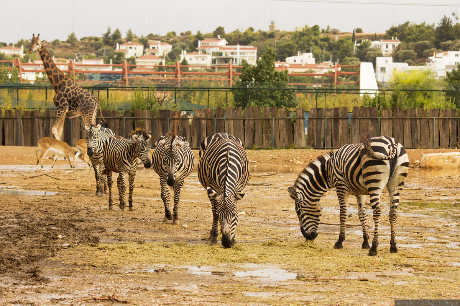 Афинский зоопарк