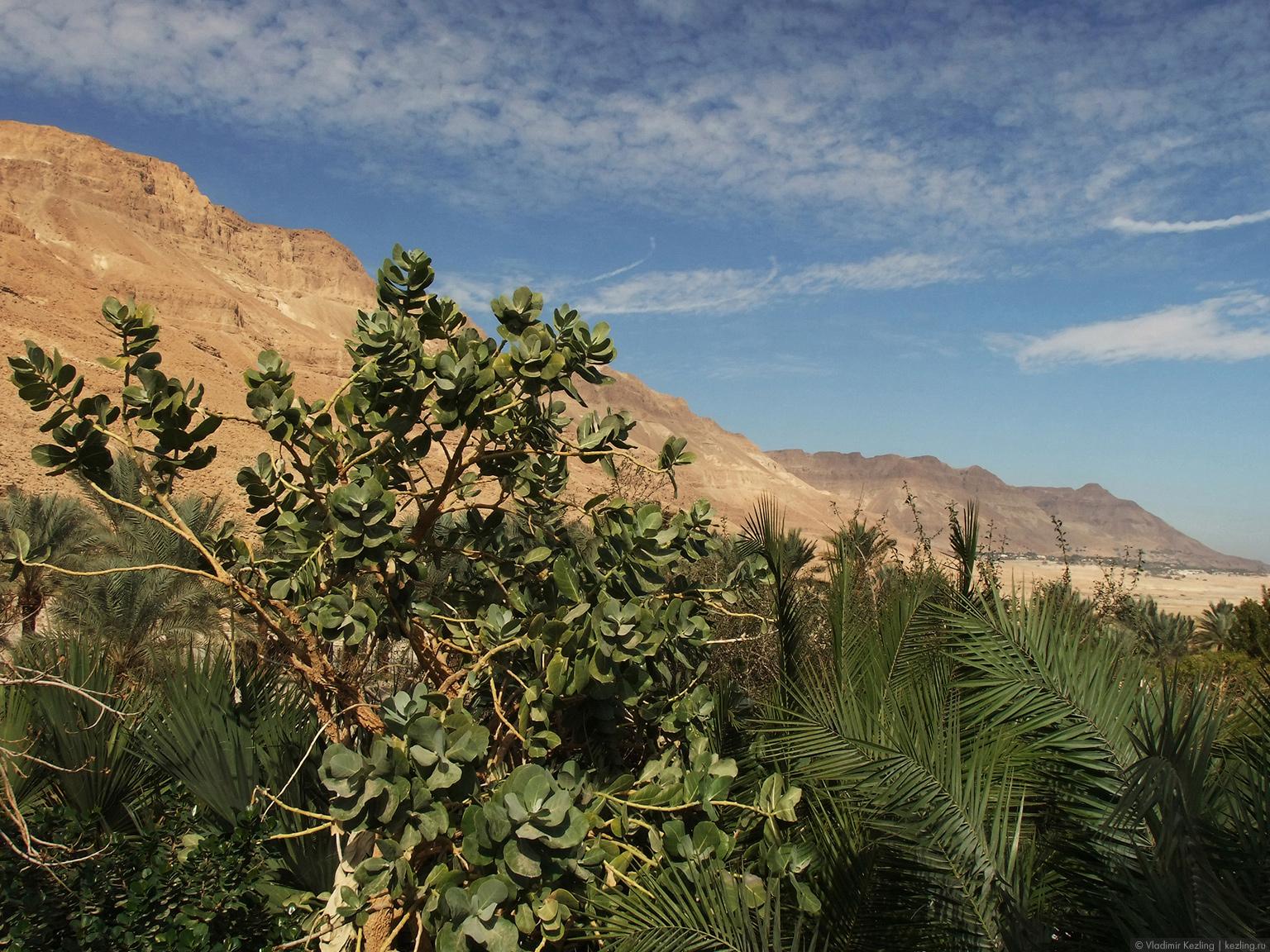 У Мёртвого моря