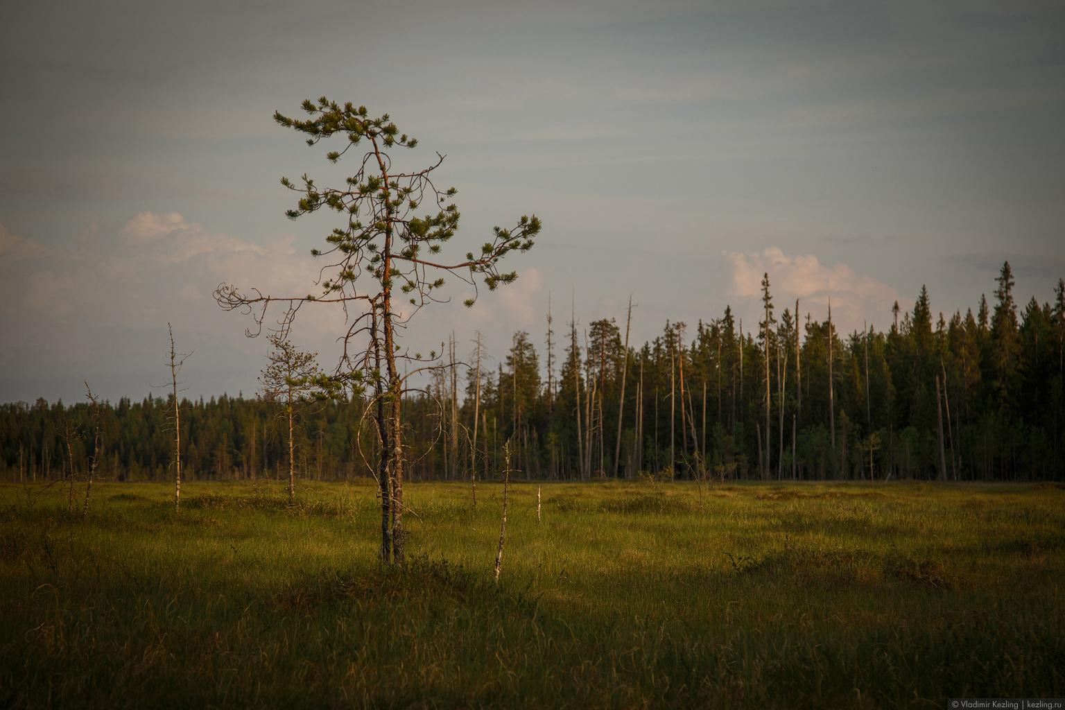 Карельское болото
