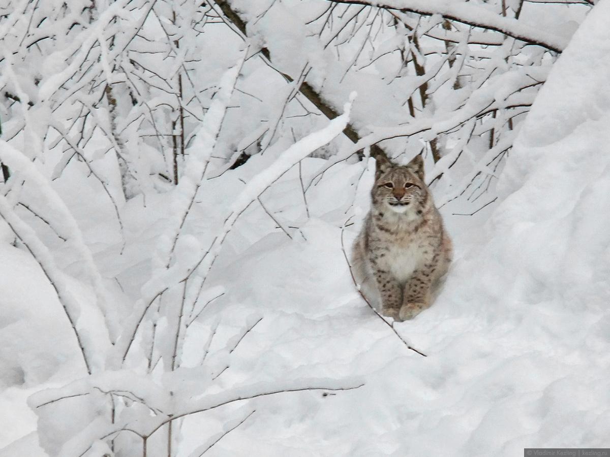 Зимняя Латвия. Природные тропы «Лигатне»