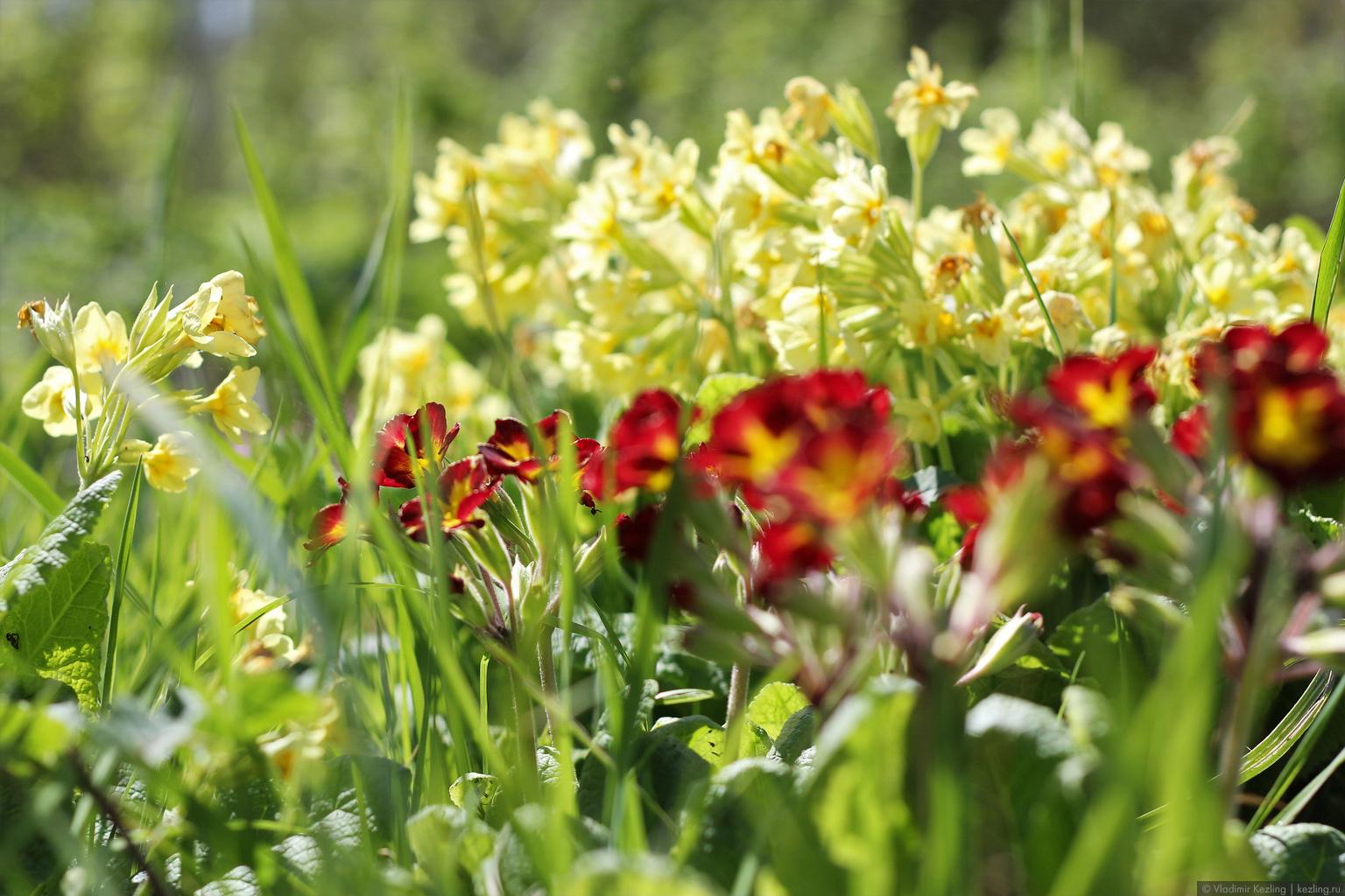 Природоведение. Часть 4: Весенне-цветочный пост