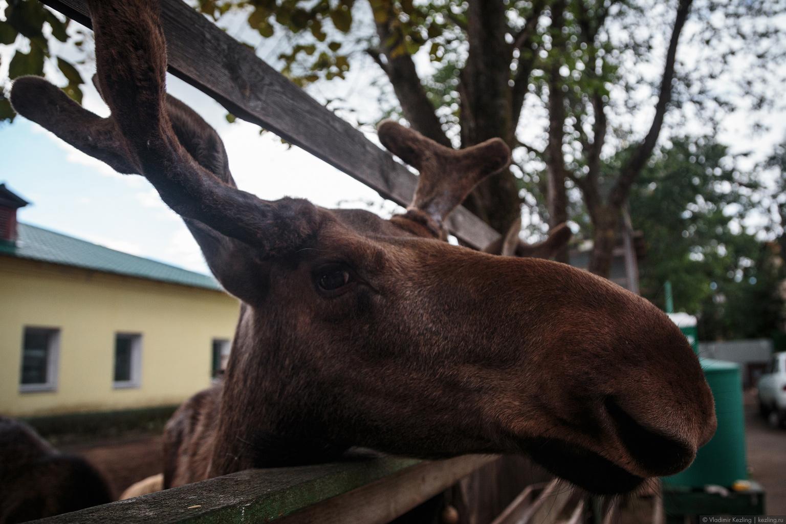 Центр диких животных «Велес»