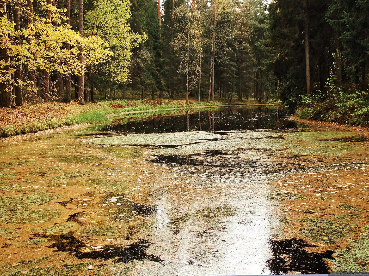Ганнибалов пруд