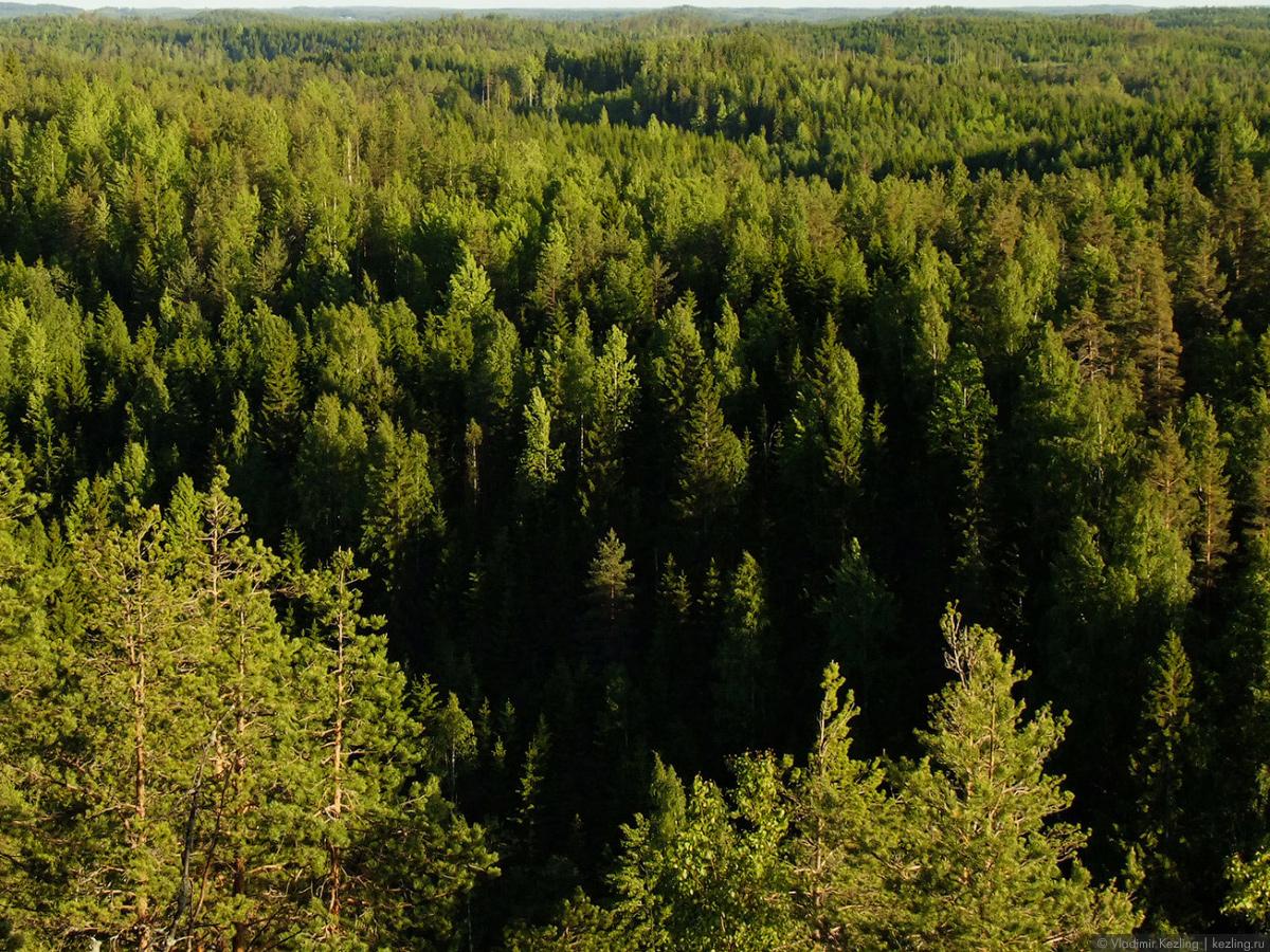 Финской дорогой зелёного золота. Гора Хауккавуори