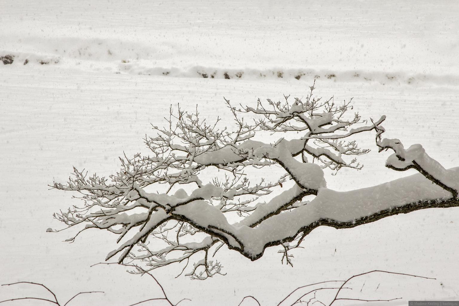 Зимний Павловск