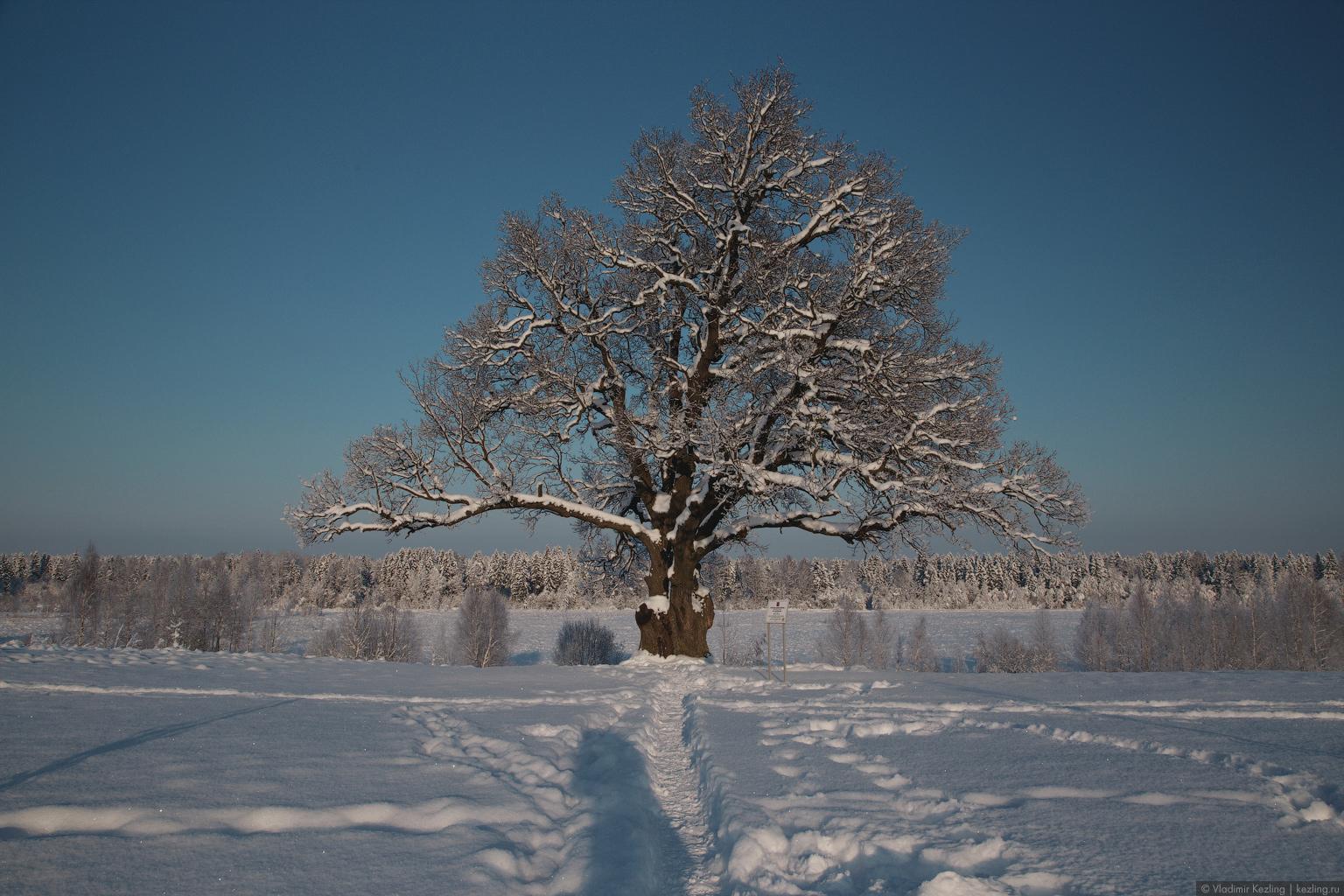 Гастроли зимней сказки в окрестностях Борисовой Гривы