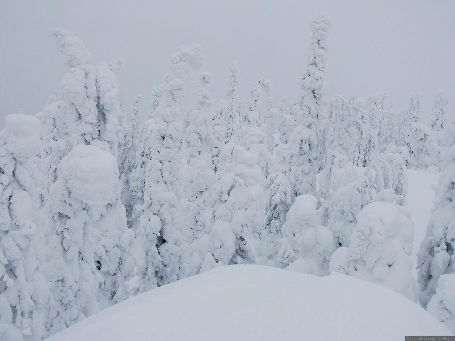 Via Karelia. Национальный парк «Коли» зимой